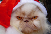 Don't Let Grinch-Like Hackers and Fraudsters Ruin the Holidays