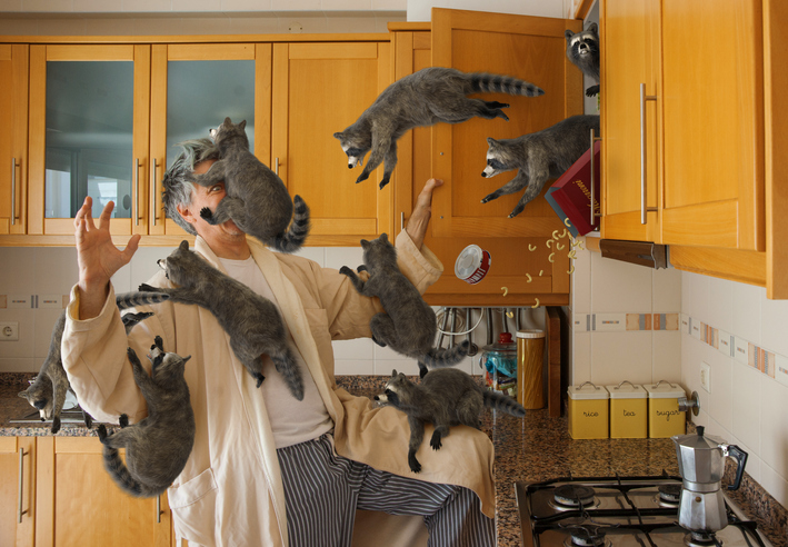 A Different Kind of Raccoon Attack